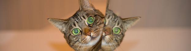 10 интереснейших фактов о кошках