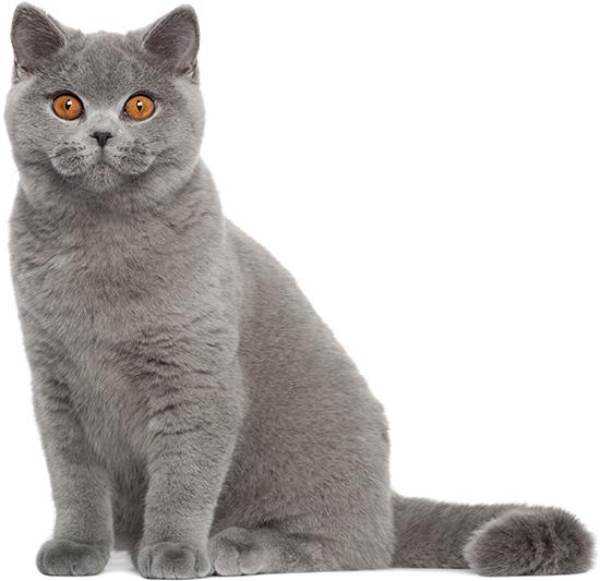 кормление кошек, сухой корм для кошек, для котов, сухой рацион