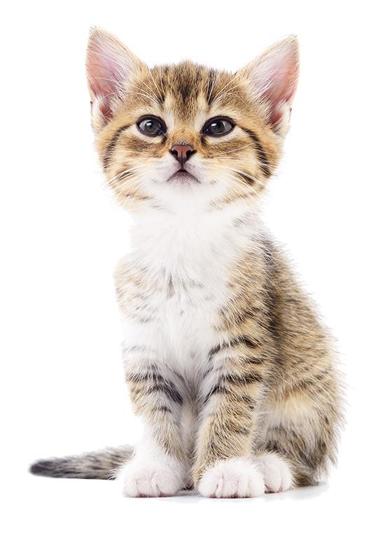 сухой корм для кошек, корм для котов
