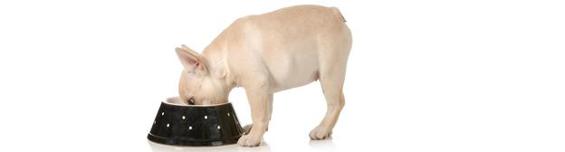 Собака - лучший друг человека. Какую еду для нее выбрать?