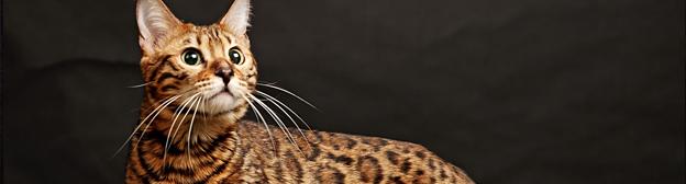 Питание животных и состояние шерсти
