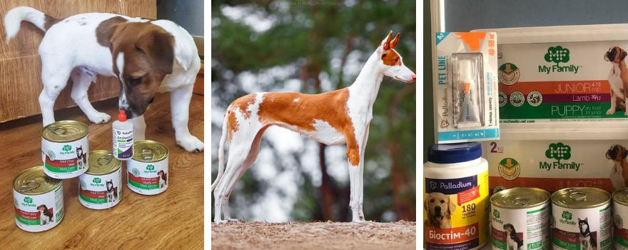 Віртуальна виставка собак за підтримки Асоціації Кінологів України